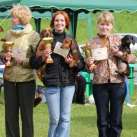 The best breeders of dachshunds in Russia!