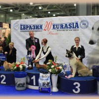MAIN RUSSIAN DOG SHOWS 2011