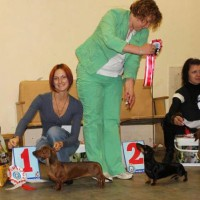 SPECIAL DACHSHUND SHOW