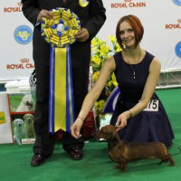 Formula Uspeha Colibri - CAC, CACIB, BOB, 1-Best in Group, 1-Best in Show!!!!