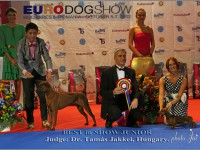 Formula Uspeha Colibri - Junior Euro Winner, 1-Best in Show Junior (2012)