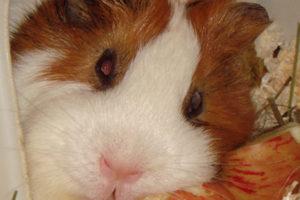 Гостиница для грызунов / Hotel for rodents
