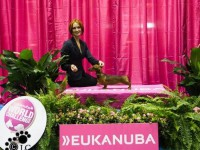 Eukanuba National Championship - Formula Uspeha Colibri