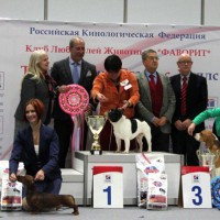 Formula Uspeha Big Bang - CAC, BOB, 1-Best in Group, Res.Best in Show