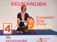 Formula Uspeha Colibri ( KS ) - CAC, CACIB, BOB, 4 - Best in Group, Euro Winner, Norwegian Champion!