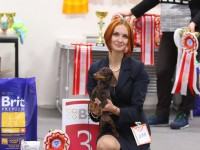 Formula Uspeha Pistol (KS) - Best Peppy, 3-Best in Show Puppy