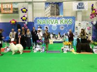 Formula Uspeha Top Gear - JCAC, BOB, JCH EST, Res.Best in Show Junior, 1- Best in Group, RES.BEST IN SHOW!