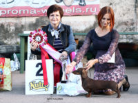 Formula Uspeha Chanel (KS) – CAC, BOB, Best in Group, Res.Best in Show!!!