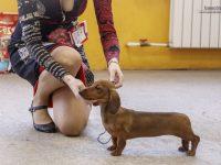 Formula Uspeha Solera Reserva - Best Baby, 1-Best in Show Baby!