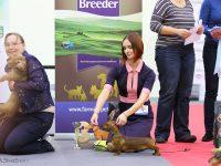Formula Uspeha Raketa - Best Puppy, 3-Best in Show Puppy