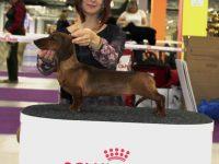 Formula Uspeha Solera Reserva - 2xBest Puppy