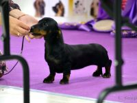 Formula Uspeha Princess - 2xBest Baby, Res.Best in Show Baby