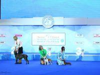 Formula Uspeha Raketa – Best Puppy, 1-Best in Show Puppy (65 puppies )