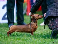 Formula Uspeha Solera Reserva - Best Puppy, 4-Best in Show Puppy