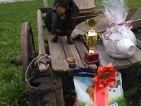 Formula Uspeha Happy Life - Best Veteran, BOB, Res.Best in Group, 3-Best in Show Veteran