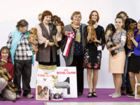 Formula Uspeha Raketa (KS) - Club Winner, BOB, Res.Best in Show