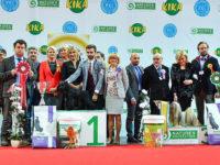 Formula Uspeha Raketa – CAC, CACIB, BOB, CH LIT, 1-Best in Group, 4-Best in Show!!!