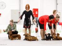 Formula Uspeha - 3-Best Kennel