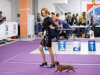 Formula Uspeha Raketa (KS) - Club Winner, BOB, 1-Best in Show!!! Res.Super Best in Show!