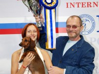 "INTERNATIONAL DOG SHOW CACIB FCI ""RUSSIA-2008"""
