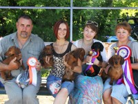Russia. Ivanovo. Special Dachshund Show - 2012
