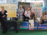 Formula Uspeha Cleopatra - Best Junior, 3-Best in Show Junior