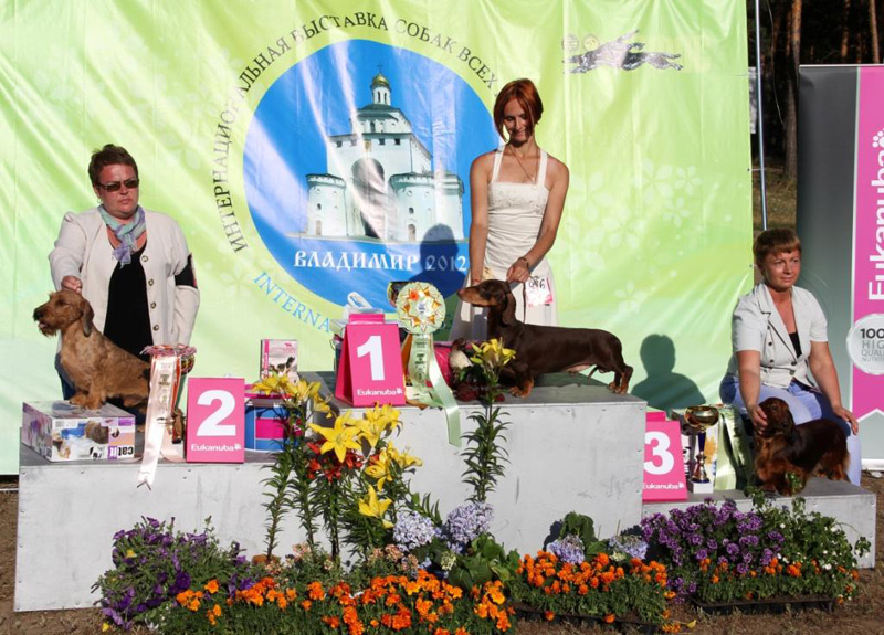 Russia. Vladimir. International Dog Show - 2012