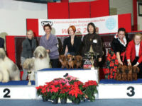 FORMULA USPEHA - Best Kennel