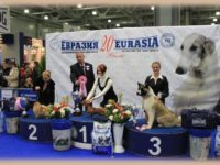 MAIN RUSSIAN DOG SHOWS 2011