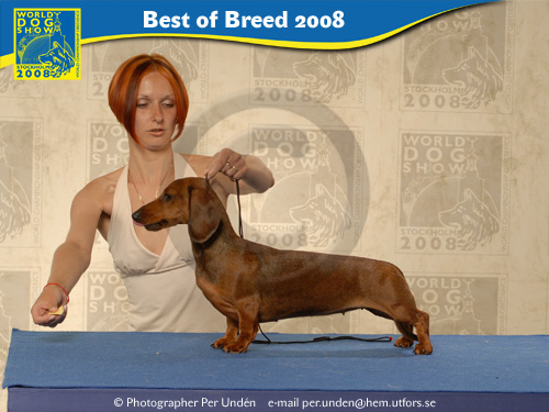 FORMULA USPEHA GREATEST HIT WORLD WINNER-2008 BEST OF BREED