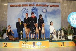 FORMULA USPEHA – BEST KENNEL 2 place in BIS BREEDERS GROUP