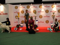 Formula Uspeha Big Bang - Best Junior, 3-Best in Show Junior