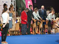 Formula Uspeha- 2-nd place Best Breeders Groups - EDS-2012
