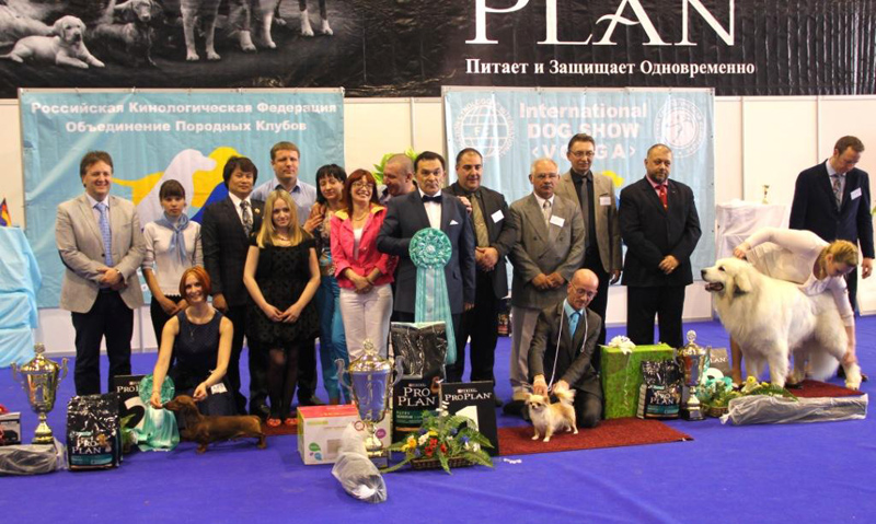 Formula Uspeha Big Bang - CAC, CACIB, BOB, 1-Best in Group, Res.Best in Show!