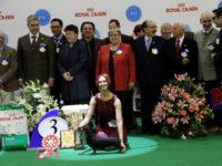 Mokko Maksimum Revolutsia - Best Veteran, BOB, 1-Best in Group, 3-Best in Show!!!!
