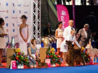 Formula Uspeha Greatest Hit - Res.Best in Show Veteran Euro Dog Show - 2012