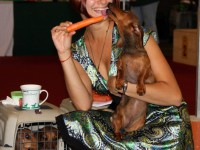 27.07.13. Germany. WUT-2013 World Dachshunds Championship.