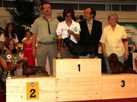 Formula Uspeha Colibri - BOB, Club Champion DTK-2013, RES.BEST IN SHOW!!!