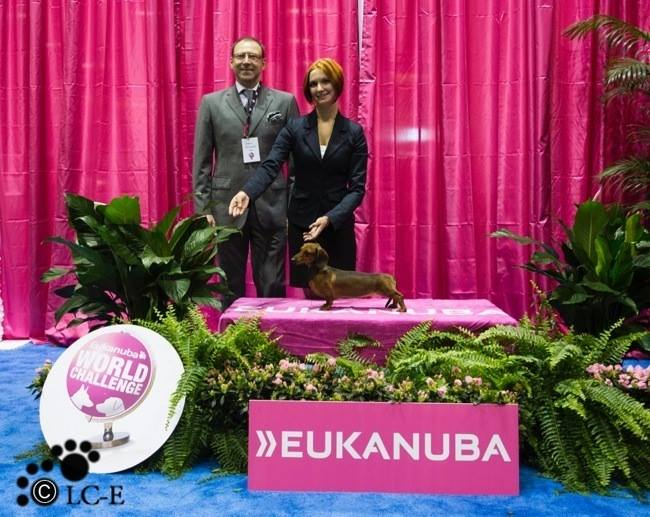 USA. Orlando. Eukanuba World Challenge & National Championship 2013