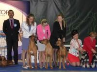 Formula Uspeha - Best Kennel