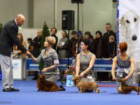 Formula Uspeha Colibri - CAC, CACIB, CH RKF, BOB, Res.Best in Group