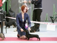 Formula Uspeha Cleopatra – 1-CW, R.Best Hunting dog in Show