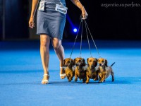 Formula Uspeha - 1-Best Kennel in breed, 4-Best Kennel BIS