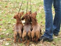 Formula Uspeha – 1 Best Kennel