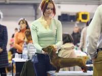 Formula Uspeha Nori – Best Puppy, 1-Best in Show Puppy