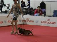 Formula Uspeha - 2 - Best Kennel