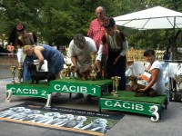 Formula Uspeha Silfida - CAC, CACIB, BOB, 3-Best in Group, Champion of Montenegro