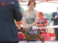 Formula Uspeha Nori (MS) – J.CAC, Best Junior (The 10 the best dogs BIS junior )