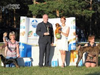 "Formula Uspeha Triela Extra Hit–CAC,R.CACIB,1-Best in Show Honorary ring ""Proud of Hunting Breeding""!"