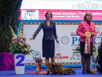 Formula Uspeha – 2 –Best Kennel